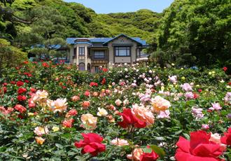 鎌倉文学館 バラ